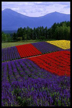 Biei, Hokkaido    ღ♥Please feel free to repin ♥ღ www.myvintagecameras.com