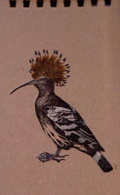 European Hoopoe Notepad (3.00 USD) by antiquatedfuture