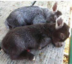 awwww baby donkeys....