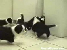 Matrix Cat Fight funny