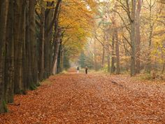 Mastbos Breda Living In Amsterdam, Rotterdam, Holland, Dutch, Places To Go, Country Roads, Fall, Tips, Beautiful
