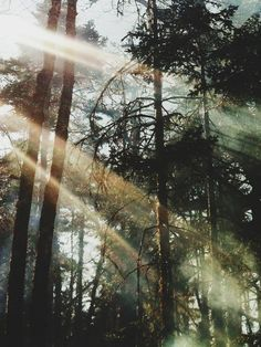 for the faeries ❧ rays of light in the forest