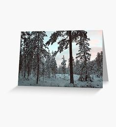 Morning Winter Light Greeting Card