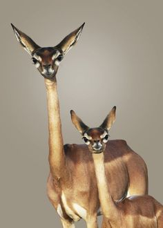 funnywildlife: emotionielb2uty:  bitchesnhoes:  woodchuckcanuck:  WTF?  asl;jf;alksjdf Silly deer animal thing  these look like the needleheads from that Jimmy Neutron special where they went on an alien gameshow to save the earth