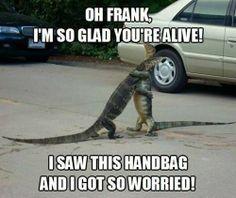 Funny Aligators