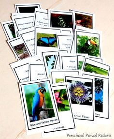 Free Tropical Rainforest Cards with facts on the backs!