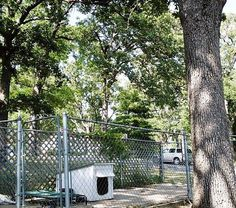 How to landscape a dog kennel Play Yard, Dog Rooms, Cat Supplies, Patio Design, Curb Appeal, Outdoor Spaces, Improve Yourself, Dog Cat, Dog Kennels