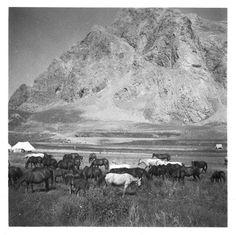 SLA-Schwarzenbach-A-5-06/187 Persien, Elburs-Gebirge (Elburz): Pferde, 1935-1935 (Dokument)