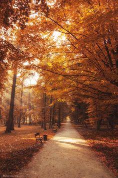 Fall In Love, 25 Imagenes para Adorar el Otoño