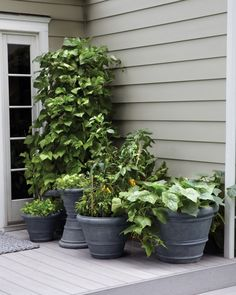 Large plants such as beans, cucumbers, and tomatoes require large pots (two feet in diameter or more). Smaller pots are perfect for peppers, greens, kale, and herbs.