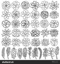 Hand drawn line succulent plant isolated on white background. Vector illustration #Succulentplants
