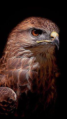 Pretty Birds, Beautiful Birds, Animal Species, Birds Of Prey, Fauna, Raptors, Bird Art, Reptiles, Creatures