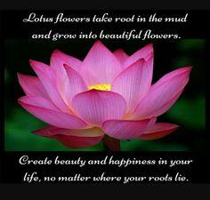 Lotus story