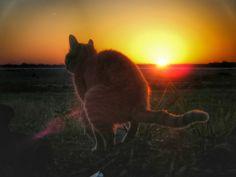 #cat art | Tumblr
