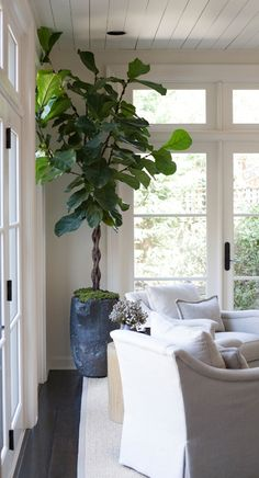 © Julie Wage Ross for Sean Anderson Design Beautiful Houses Interior, Beautiful Homes, Peaceful Home, Potted Trees, Fiddle Leaf Fig, Architecture Details, Living Room Decor, Living Rooms, Indoor Plants
