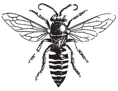 Male Honey Bee Coloring Pages : Coloring Sky Wasp Tattoo, Bee Tattoo, Sternum Tatoo, Honey Bees, Honey Bee Drawing, Arte Yin Yang, Bee Coloring Pages, Scientific Drawing, Retro Tattoos