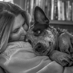 There is NOTHING like a Cattle Dog...NOTHING ♡♡♡♡♡
