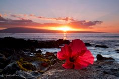 Red Hibiscus Sunset | Hawaii Pictures of the Day