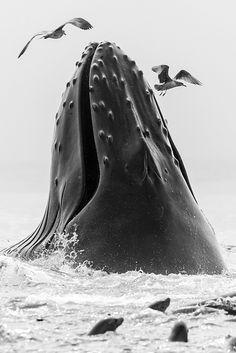 A Whales Life - Gulp