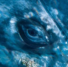 Photo by grey whale Orcas, Animal Close Up, Ocean Quilt, Gray Whale, Photos Of Eyes, Whale Art, Ocean Creatures, Humpback Whale, Whales