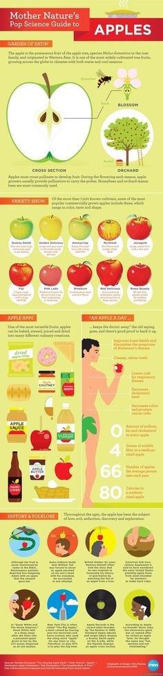 Apples inphographic