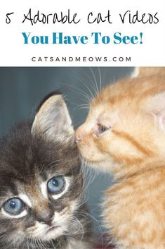 Some of our favorite adorable cat videos currently on the internet to brighten up your day! #ilovemycat #lifewithcats #funnycat #happycat