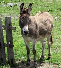 The donkey looks so content and happy. It gives me a good feeling inside.