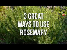 Check out these three inventive uses for this popular garden herb. Check out these three inventive u