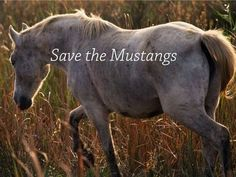 Save the Mustangs stop the BLM.  /How can the BLM round up these beautiful horses & send a lot to slaughter.  I will never understand.  Although I don't doubt them being paid off & greed may help EL./