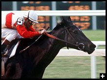 Ruffian (1972-1975)  Undefeated racehorse. Ranked as one of the top 100 female athletes ever.