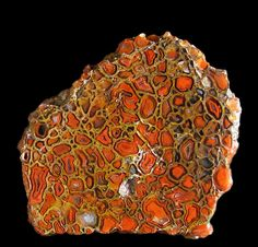 Rare red gem, fossil bone.  This is dinosaur gemstone quality, rare but you'll find some on your hunts, Utah Desert.