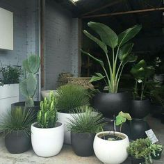 patio plants The Pot Warehouse, Mona Vale patioGarden is part of Plants - Potted Plants Patio, Indoor Plants, House Plants, Plants In Pots, Indoor Gardening, Fence Plants, Urban Gardening, Potted Plants Full Sun, Container Gardening