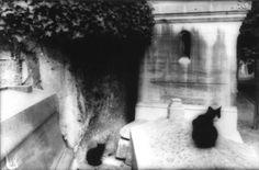 by Gábor Kerekes Paris - Paris Images, Artwork, Photographers, Painting, Animals, Animales, Work Of Art, Animaux, Paris Pictures