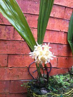Orquídea de Animart+plants