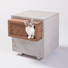 Architects design cat shelters for animal charity fundraiser