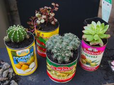 succulents-img-6