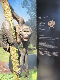 Bigfoot | Roots | Pierolapithecus Catalaunicus