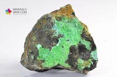 Chryzokola- Interesujący okaz naskorupień chryzokoli na matrixie z dawnych kopalń z rejonu Miedzianka - Ciechanowice w Rudawach Janowickich. Pochodzenie: Miedzianka, Rudawy Janowickie, Sudety, Polska Wymiary: 6.3 x 6 x 2.2 cm Waga:96 g Wzór chemiczny: ((Cu;Al)2H2Si2O5(OH)4 • nH2O)