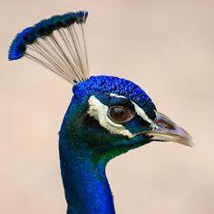 Wild Nature, Bird, Animals, Animales, Animaux, Birds, Animal, Animais