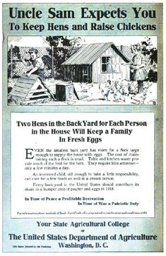Getting Started With BackyardChickens-- lots of good info plus diagram for a coop and chicken run
