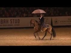 Horse dancing to Singing in The Rain - Mario Luraschi - Nuit du Cheval 2011 - Horse Sense