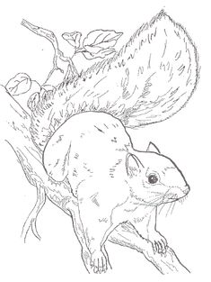 Realistic Grizzly Bear Coloring page   Bear coloring pages ...