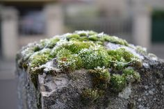 Close-up Photography of Mossy Rocks  Free Stock Photo