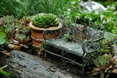 Fairy garden bench and potted plants.