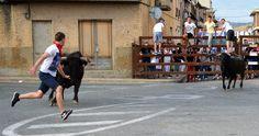 Santacara: Vacas de Pedro Dominguez Año 2015 (10) Street View, Cows