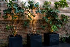 chill-out-garden-9-copyright-charlotte-rowe-garden-design
