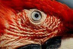 http://www.amazon.com.br/s/ref=nb_sb_noss/189-1741879-7180833?__mk_pt_BR=%C3%85M%C3%85%C5%BD%C3%95%C3%91&url=search-alias%3Daps&field-keywords=animais+selvagens+no+brasil