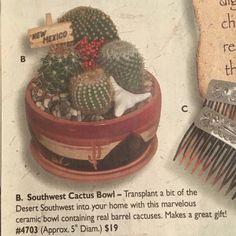Southwest cactus bowl — The Southwest Indian Foundation ~Holiday 2005 ~magazine
