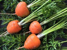 In der Schweiz wird diese kleine runde Karottensorte seit dem 1. Weltkrieg angebaut. Heute wird sie nur noch im St. Galler Rheintal ausgesät. Die Ernte dort beträgt 2'000 t Pariser Karotten und alle werden zu Konservengemüse verarbeitet. Es sind diejenigen Karotten, die wir oft zusammen mit Erbsen in der Büchse kaufen können. Jetzt weisst du bestimmt, welche Karotten ich anpflanzte. #edgarten #gartenblog #karotte Celery, Carrots, Vegetables, Sweet, Bunny, Food, Inspiration, Parisian, Harvest