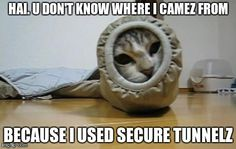 VPN tunnels for cats? :D
